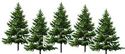 trees-left