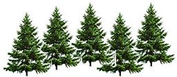 trees-right